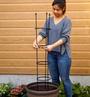 A flexible multi-shape trellis in a large planter is shaped to form a circular staking cage