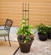 A flexible multi-shape trellis is formed into a circular staking cage to support plants in a container