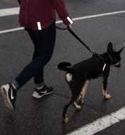 Reflector Strips attached to a jacket sleeve and back as well as a dog's collar