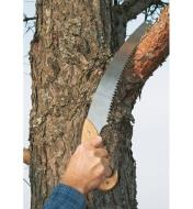 Using the pruning saw to cut through a tree branch