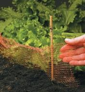Copper Blocker placed around lettuce in a garden, supported by a small stake