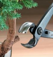 An open knob cutter about to cut a bonsai branch knob
