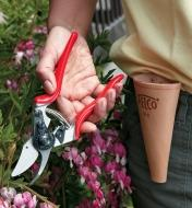 Using a Felco #6 Pruner to cut bleeding hearts