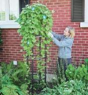 A woman tends a climbing plant on a Round Obelisk