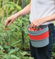 Hip-Trug being used to collect tomatoes from the garden