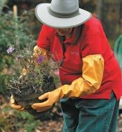A woman wearing protective pruning gloves transplants flowers in her garden