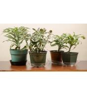 Plant Saucers and Trays