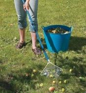 Collecting fallen apples from a lawn using the Nut & Fruit Gatherer