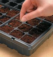 Adding seeds to each cell containing expanded coir