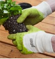 Repotting a plant, wearing mud gloves