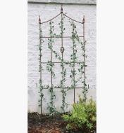 Ivy growing on the Camelot garden trellis