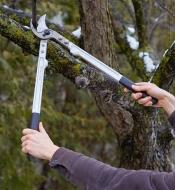 Using Bypass Loppers to cut a branch