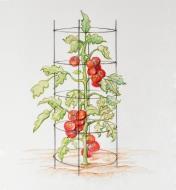 Dessin d'un grand plant de tomates soutenu par la cage à tomates pliante