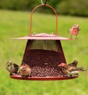 Several small birds perch on collapsible bird feeder