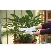 Wearing Cotton Utility Gloves while wiping down a houseplant