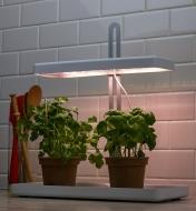 Two pots of herbs sit in the tray beneath the canopy of the tabletop LED grow light