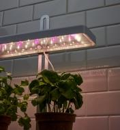 Close-up of the LEDs in the canopy of the tabletop LED grow light