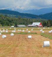 Hay bales wrapped in polyethylene sheeting in a farm field