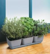 Trois types de fines herbes poussant dans une jardinière triple pour fines herbes et plantes succulentes au bord d'une fenêtre