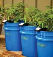 Three plastic buckets holding plants and GroBucket Self-Watering Insert