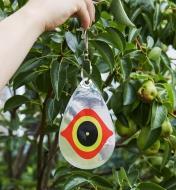 Personne suspendant un oeil effaroucheur sur la branche d'un pommier