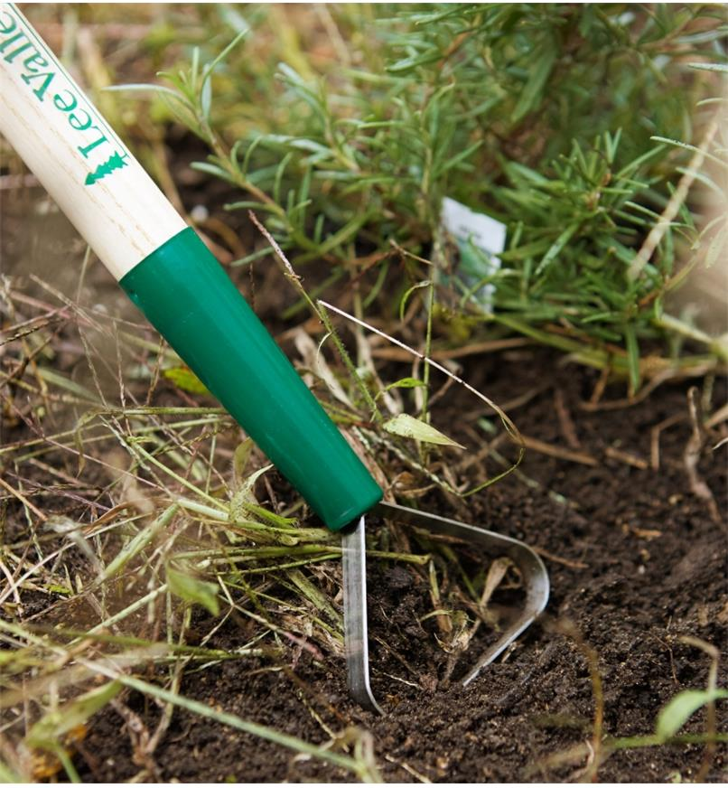 Close-up of loop hoe blade cutting weeds in a garden