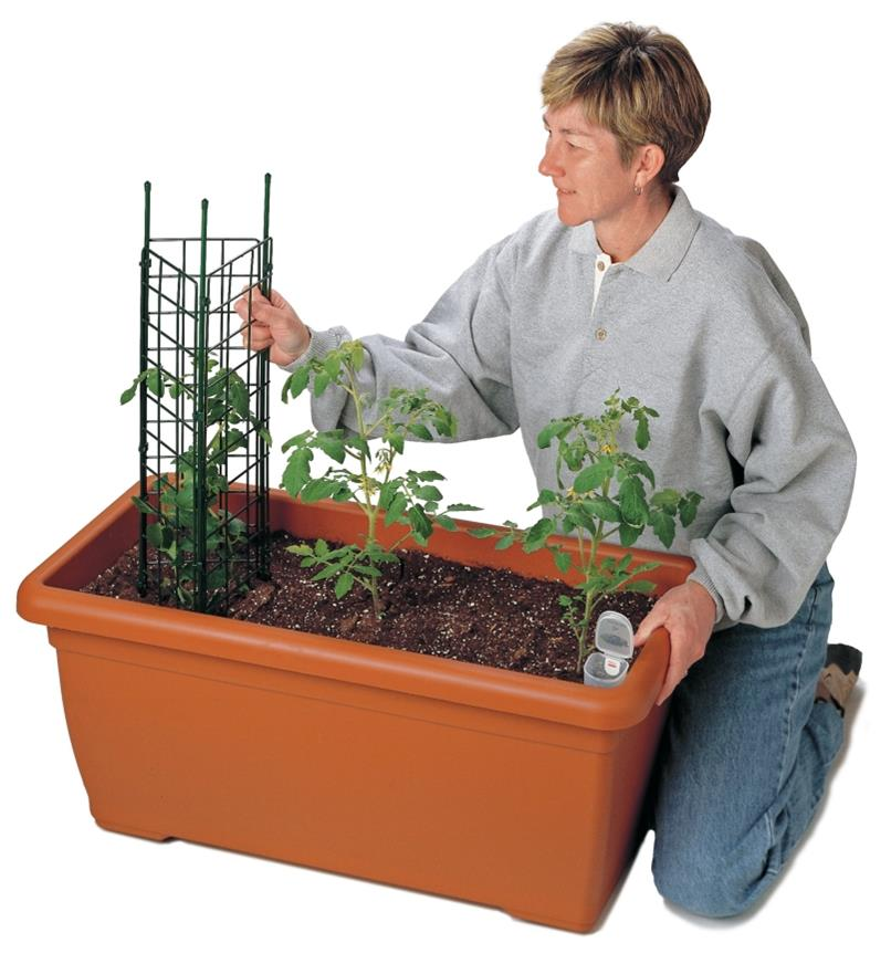 A woman installs a tomato cage in a planter
