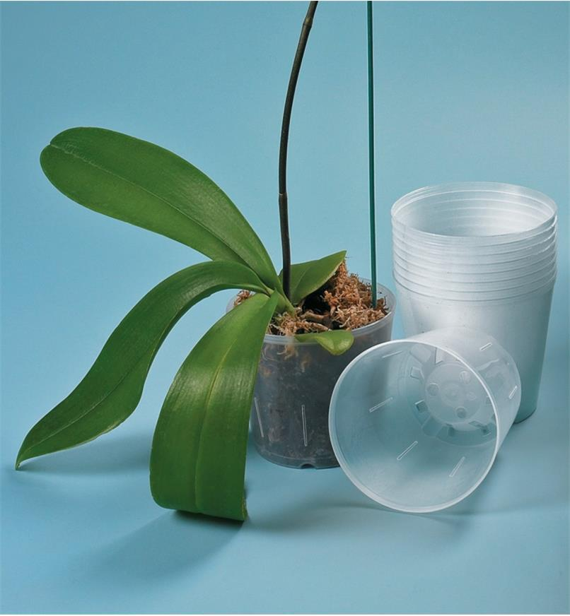 A stack of Clear Orchid Pots next to one with an orchid planted in it
