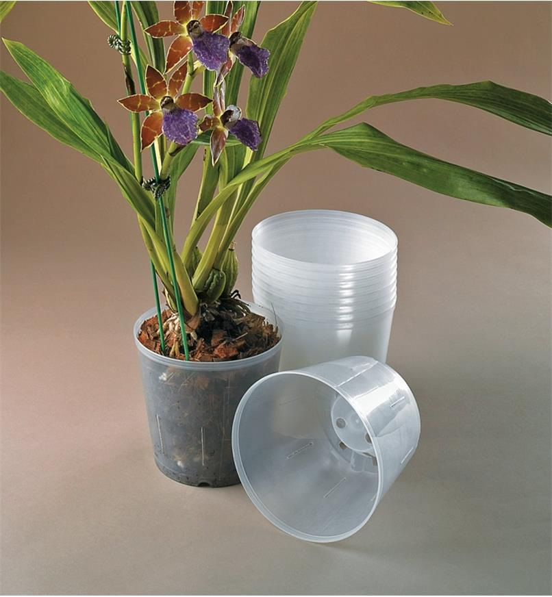XB755 - Pots transparents pour orchidées, le lot de 10