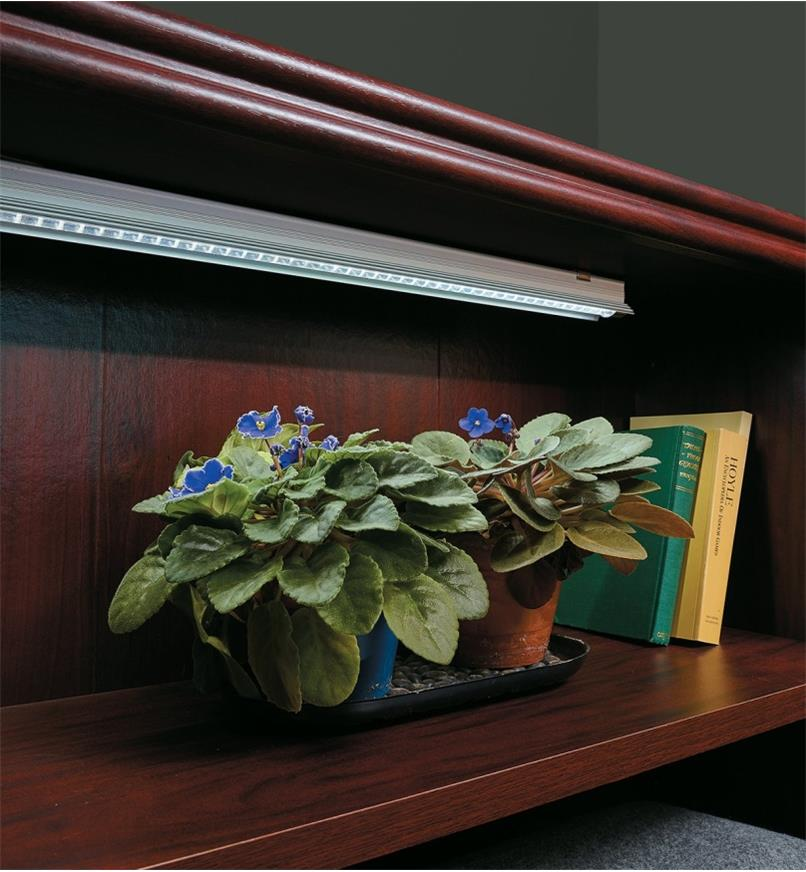 Full-Spectrum LED Grow Lights installed in a bookshelf, lighting African violets