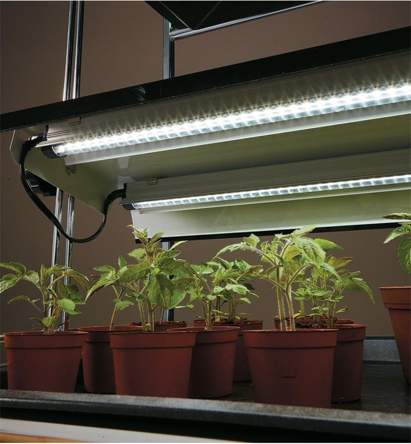 Full-Spectrum LED Grow Lights