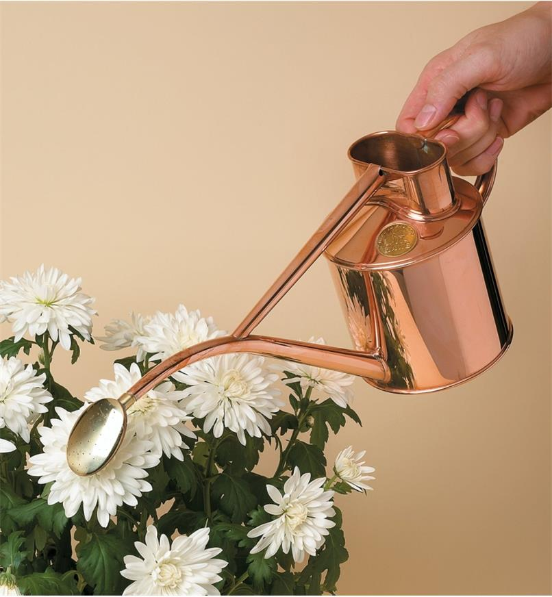 Haws Copper Watering Can positioned above potted flowers