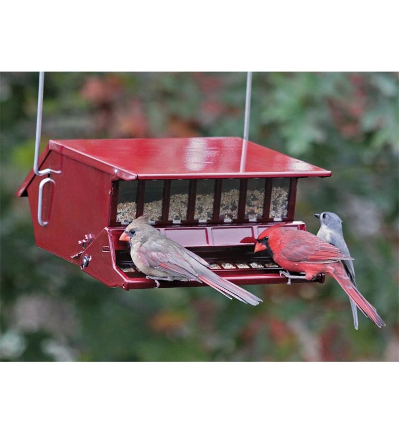 A pair of cardinals perch at the Single-Sided feeder