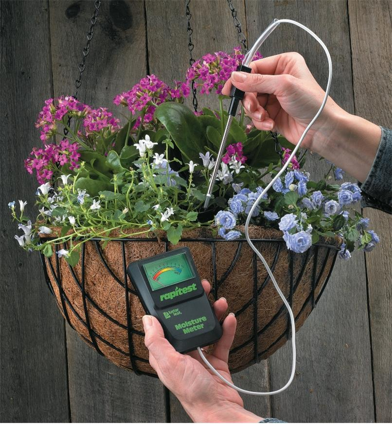 Inserting the probe of the moisture meter into a hanging basket planted with flowers