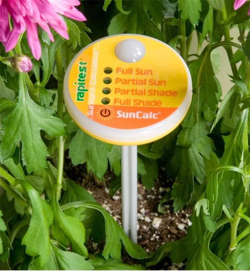 Sunlight Calculator inserted in soil in a flower garden