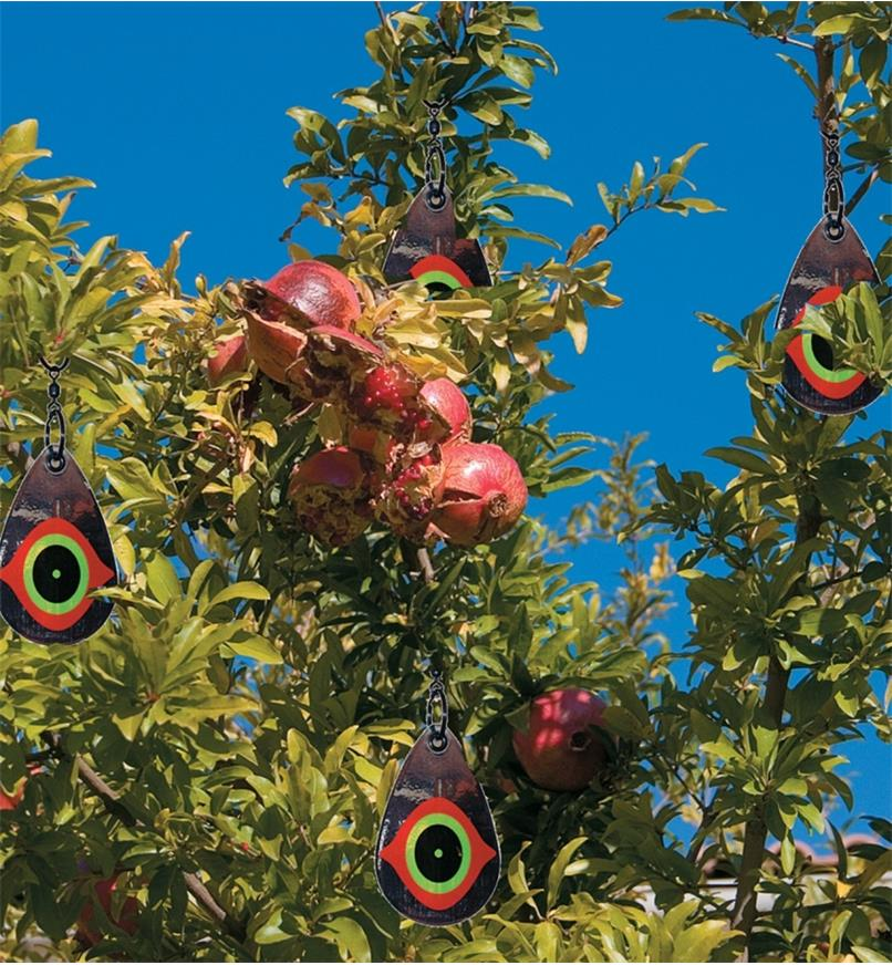 Scare Eye Bird Deterrents hung in a pomegranate tree