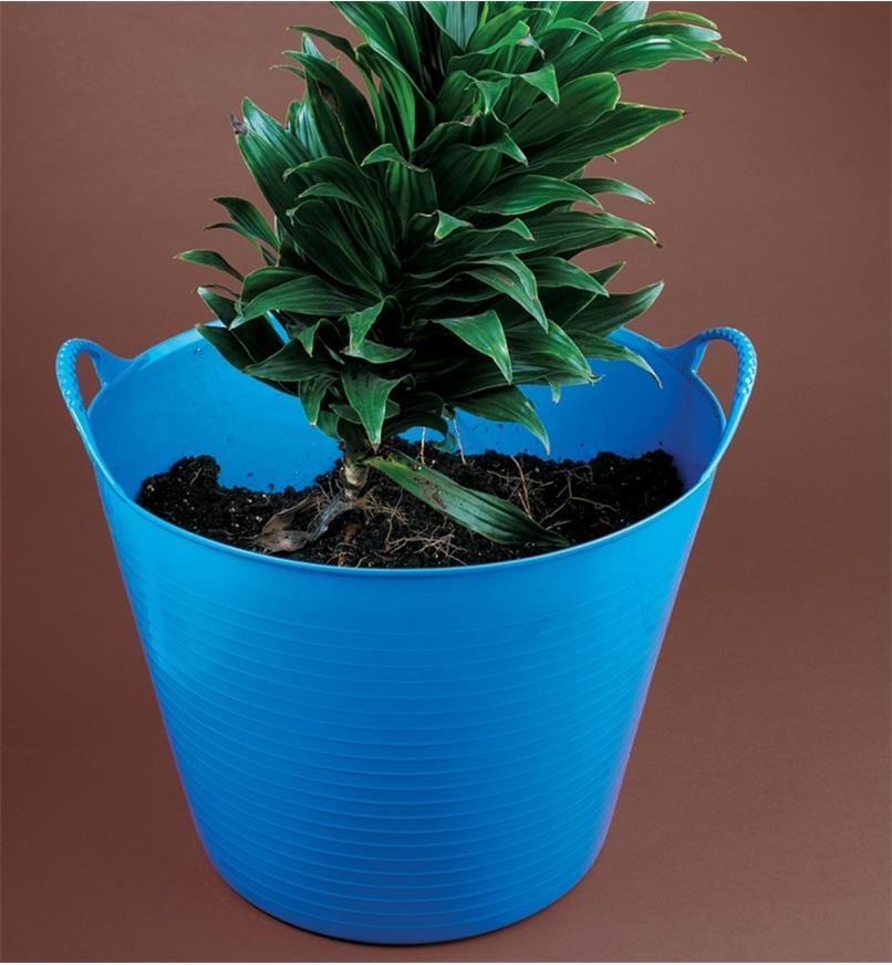 A plant in soil inside a Tubtrug