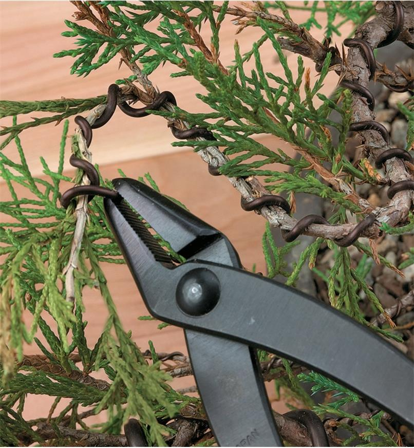 Twisting bonsai wire around a branch using long-nose pliers