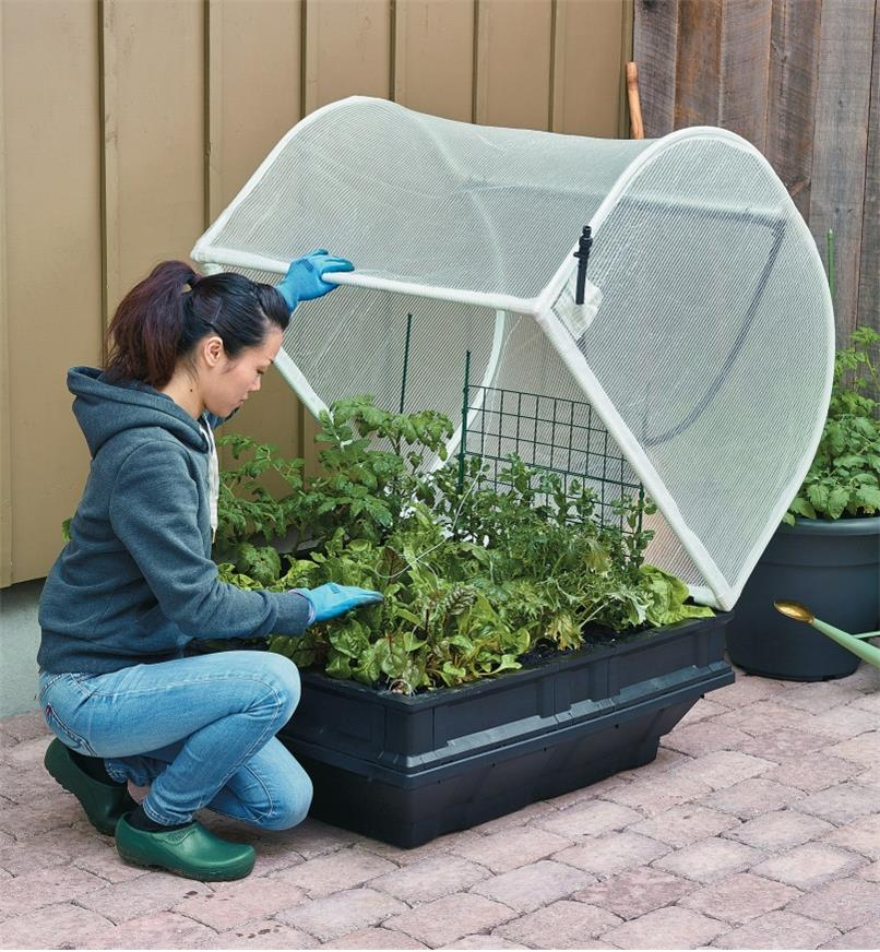 A woman lifts the cover on the medium Vegepod container garden to tend to plants