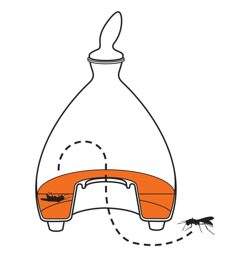 Illustration of wasp flying into wasp trap and drowning in liquid