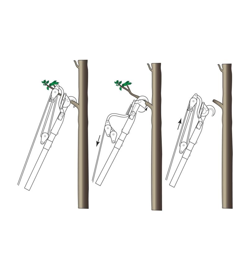 Diagram demonstrates three steps to pruning a branch