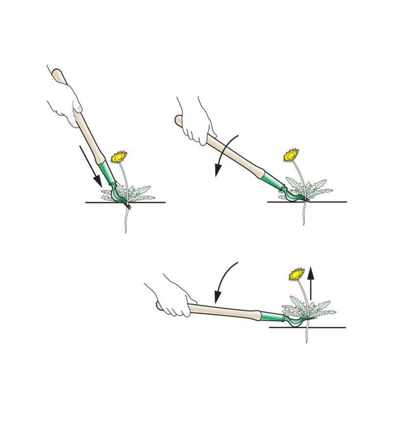 PD201 - Dandelion Digger, Short