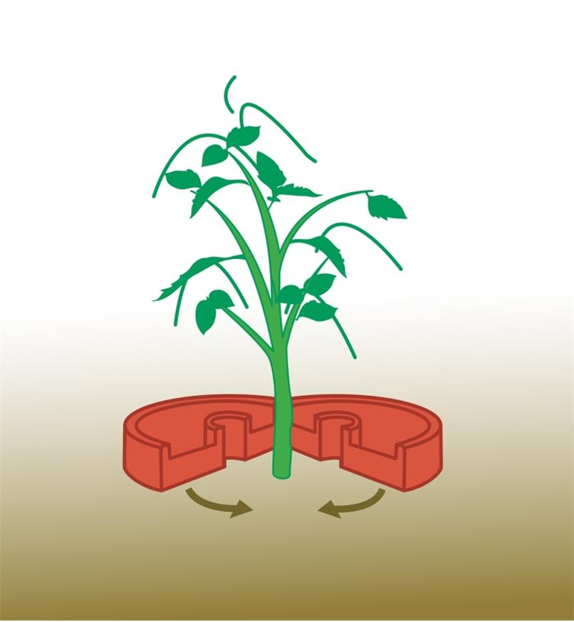 Illustration shows how to place Tomato Crater around a plant stem