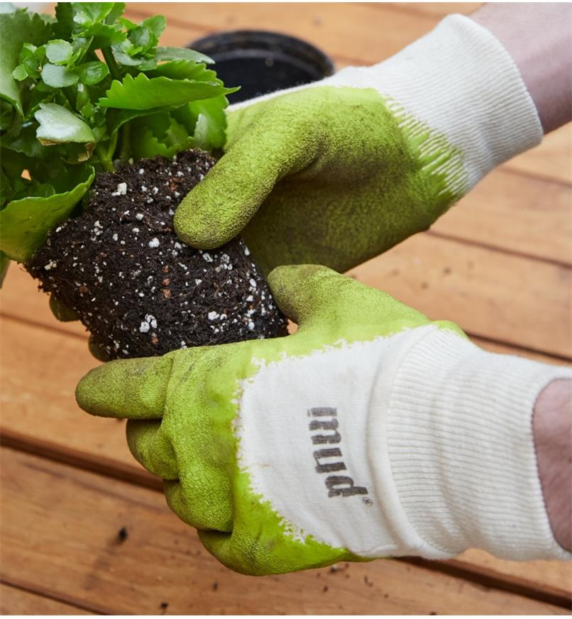 Repotting a plant wearing mud gloves