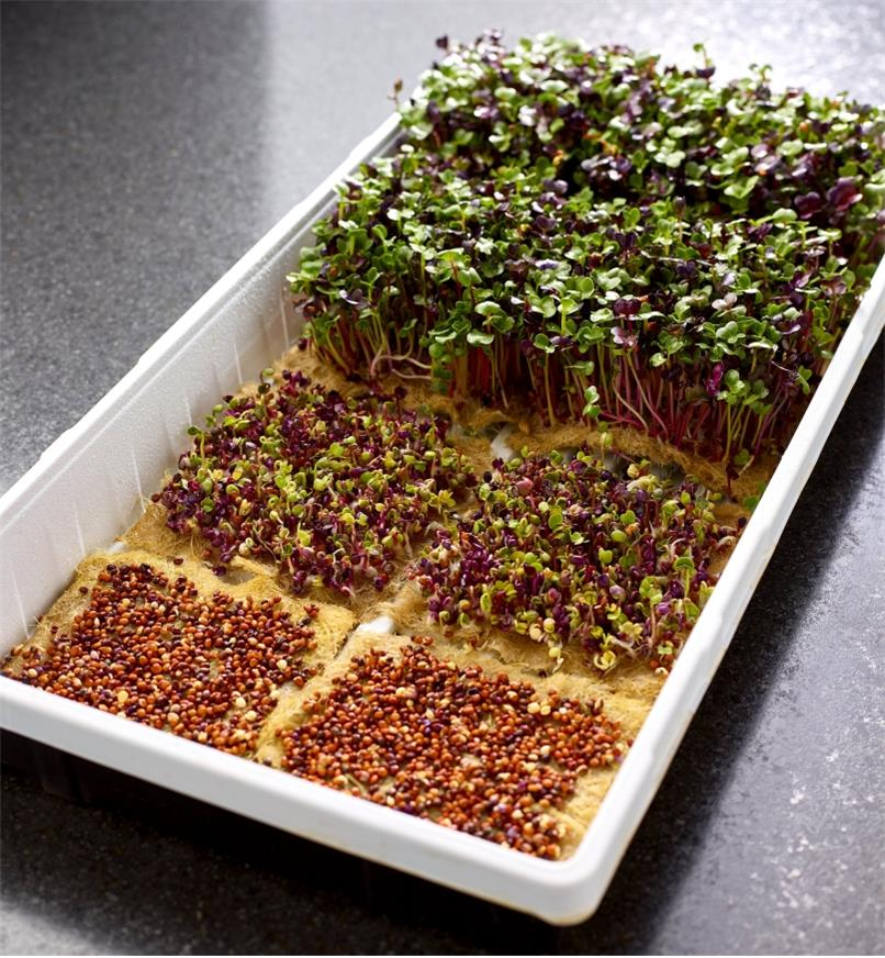 Three hemp-fiber grow mats showing seed, germination and sprout stages of microgreens