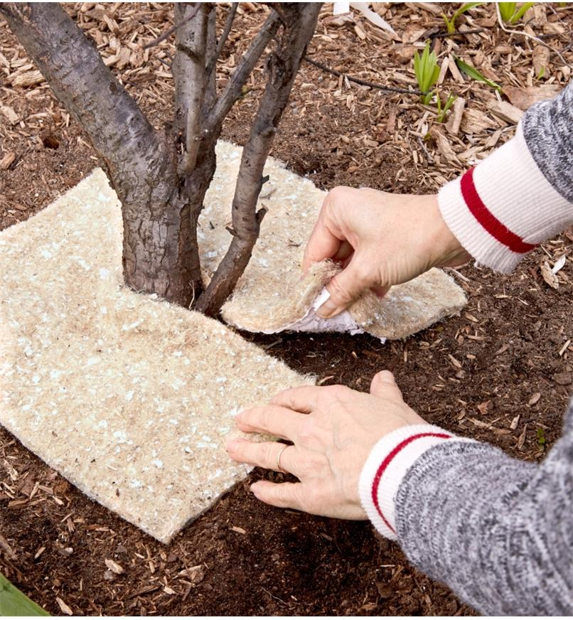 A gardener places a weed suppression square around the base of a newly planted tree