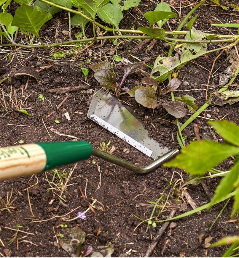 Close-up of swoe blade cutting weeds in a garden