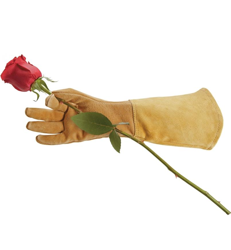 Holding a rose stem while wearing a rose glove