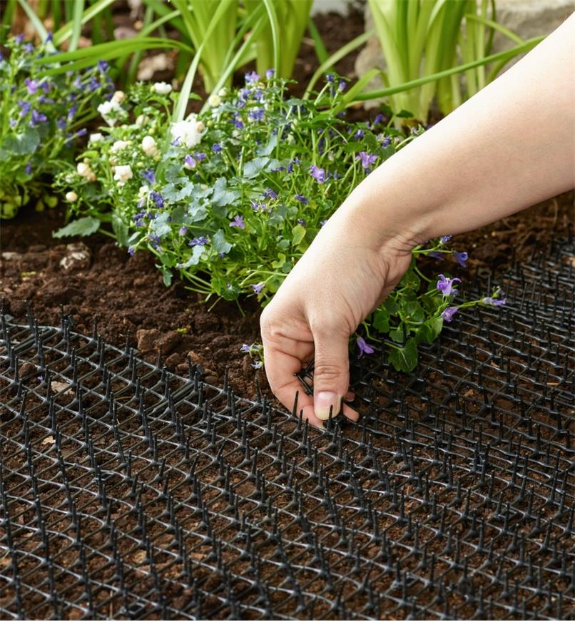 Adjusting a CatScat Mat laid out in a garden