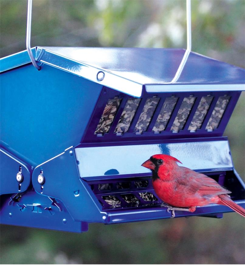 A cardinal perched at the double-sided feeder